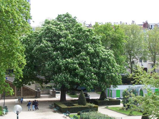 Le square René Le Gall